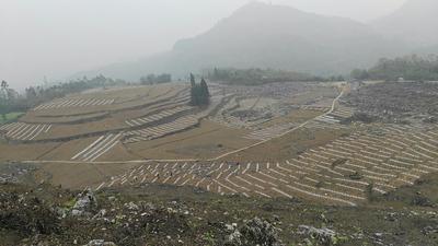 四川省乐山市市中区8424西瓜 有籽 1茬 9成熟 8斤打底