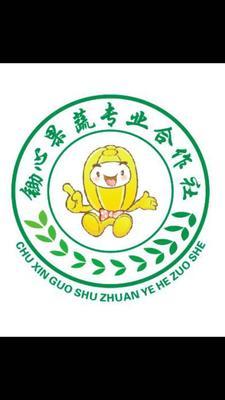 陕西省西安市阎良区阎良甜瓜 0.5斤以上