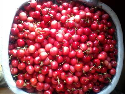 这是一张关于大樱桃 20-22mm 5-8g的产品图片
