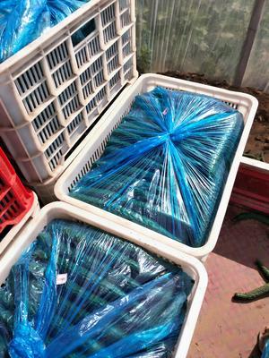 这是一张关于密刺黄瓜 22~25cm 干花带刺的产品图片