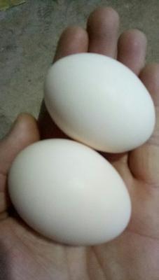 陕西省西安市长安区土鸡蛋 食用 简包装