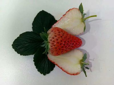 辽宁省辽阳市灯塔市白雪草莓 20克以上