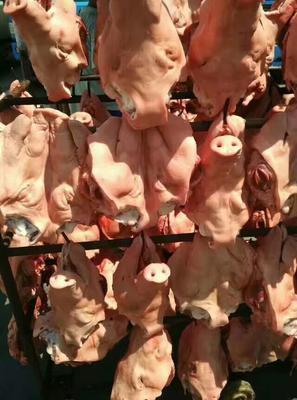 北京昌平区鲜猪头