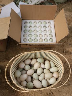 这是一张关于鸭蛋的产品图片