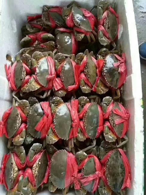 青蟹 3.0-3.5两 统货