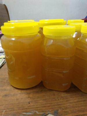 广东省惠州市惠东县槐花蜜 塑料瓶装 95%以上 1年