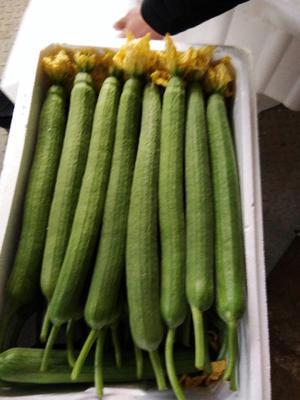 这是一张关于鲜花丝瓜 30cm以上的产品图片