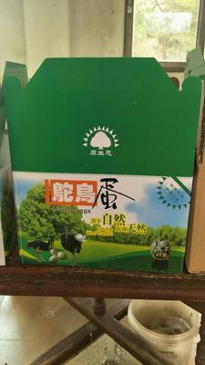 广东省汕头市潮阳区蛋鸡 母 2-3斤