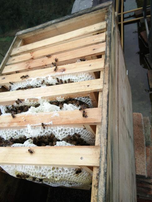 土鸡 公 9-10斤