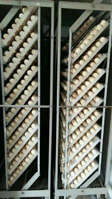四川省德阳市广汉市火鸡种蛋 孵化 箱装