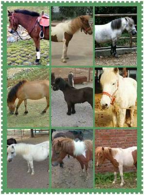 这是一张关于矮马 200-400斤的产品图片