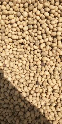 这是一张关于黄黄豆 生大豆 2等品的产品图片