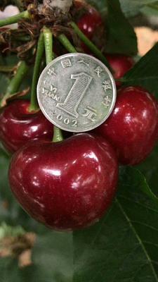 这是一张关于美早樱桃 20-22mm 12-15g的产品图片