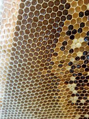 广西壮族自治区梧州市岑溪市龙眼蜜 塑料瓶装 90%以上 2年以上