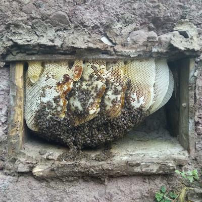 这是一张关于土蜂蜜 塑料瓶装 80%以上 2年以上的产品图片
