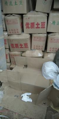云南省红河哈尼族彝族自治州建水县丽薯6号 3两以上