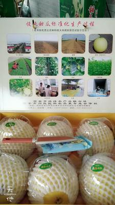 这是一张关于阎良甜瓜 1.5斤以上的产品图片