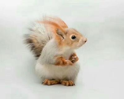 这是一张关于大松鼠的产品图片