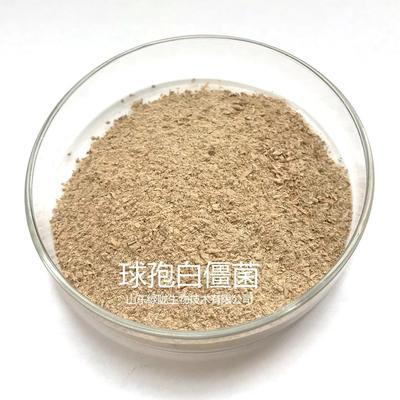 山东省潍坊市诸城市生物杀虫剂球孢白僵菌
