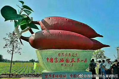 海南省澄迈县澄迈县粉糯毛薯 0.5-1斤