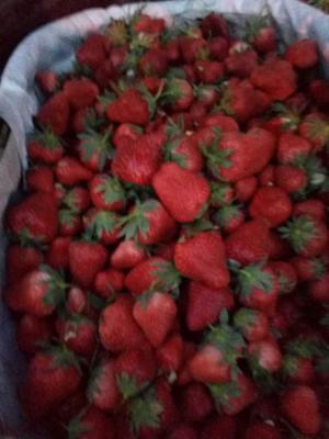 陕西省汉中市城固县美国甜查理草莓 20克以上
