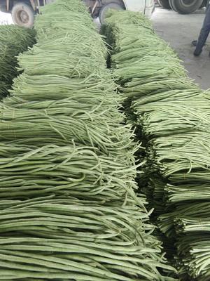 广西壮族自治区北海市合浦县绿龙豆角 50cm以上 打冷
