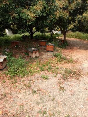 广西壮族自治区梧州市岑溪市土蜂蜜 塑料瓶装 90%以上 2年以上