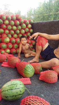 山东省潍坊市寒亭区早春红玉西瓜 有籽 1茬 9成熟 3斤打底