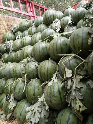 河南省商丘市睢阳区京欣西瓜 有籽 1茬 8成熟 8斤打底