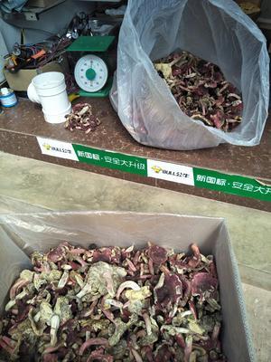 云南省普洱市江城哈尼族彝族自治县红菇干 散装 1年