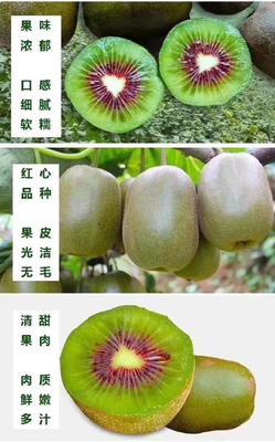 湖南省株洲市炎陵县红心猕猴桃 80~100克