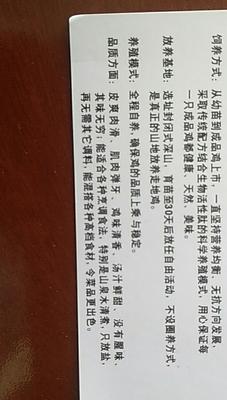 广东省东莞市东莞市土鸡 母 3-4斤