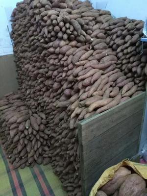 这是一张关于一点红红薯 红皮 混装通货的产品图片