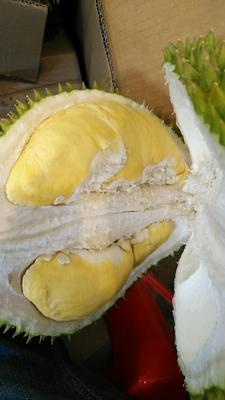广西壮族自治区南宁市江南区托曼尼榴莲 40 - 50%以上 2 - 3公斤
