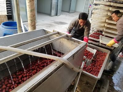 河北省沧州市新华区清洗机