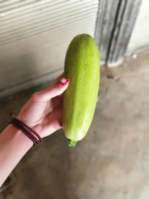 河南省南阳市新野县绿皮西葫芦 0.8~1斤