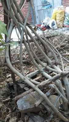 广西壮族自治区桂林市灵川县芙蓉椅子