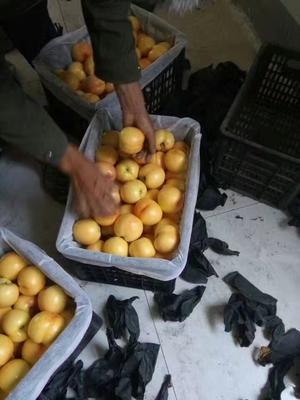 山东省临沂市莒南县黄油桃 3两以上 55mm以上