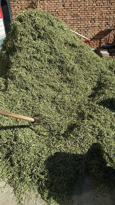 这是一张关于架豆王豆角 15cm以上 不打冷的产品图片