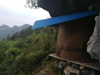 湖南省湘西土家族苗族自治州花垣县土蜂蜜 塑料瓶装 100% 2年以上