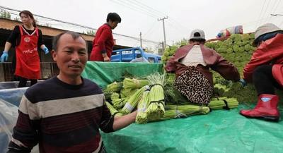 这是一张关于杞县蒜苔 一茬 50~60cm 精品的产品图片