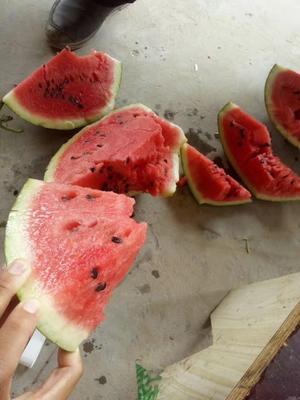 这是一张关于8424西瓜 有籽 1茬 9成熟 6斤打底的产品图片