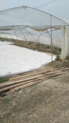 安徽省宿州市泗县红薯粉