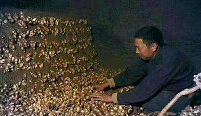 山东省临沂市沂南县安丘生姜 水洗 5两以上