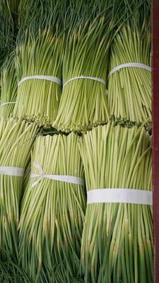 江苏省徐州市贾汪区红帽蒜薹 一茬 30~40cm 通货