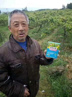 河南省郑州市中原区樱桃花粉