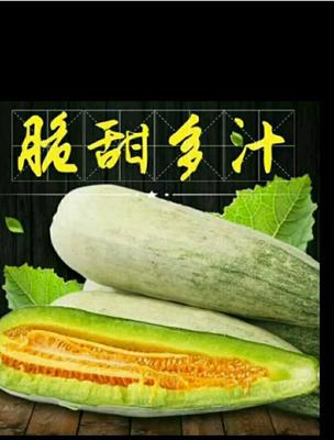 这是一张关于博洋61甜瓜 0.5斤以上的产品图片