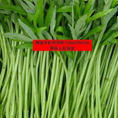 这是一张关于白蒌蒿 35~40cm 的产品图片