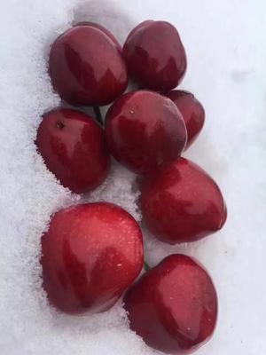 这是一张关于美早樱桃 20mm以上 15-18g的产品图片