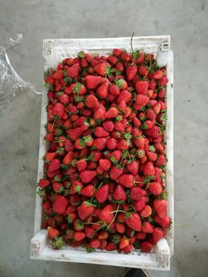 河北省秦皇岛市昌黎县美国甜查理草莓 20克以下